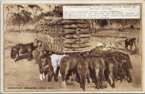 Teamster Camp in Australia Carting Wheat to Railway Station Unused Postcard E71