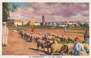 CASABLANCA, Morocco; La Ville indigene, Sheep, 1910-20s