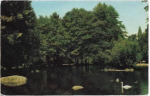 US, Unused Lithia Park, Ashland, Oregon.  Swans swim in a lake.