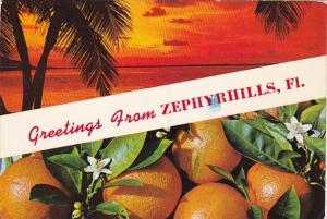 Florida Zephyrhills Greetings From Zephyrhills