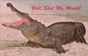 Florida Miami Well Shut My Mouth Florida Offers Real Southern Hospitality 1975
