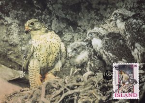 Iceland Gyrfalcon WWF Stamp FDC First Day Cover Postcard