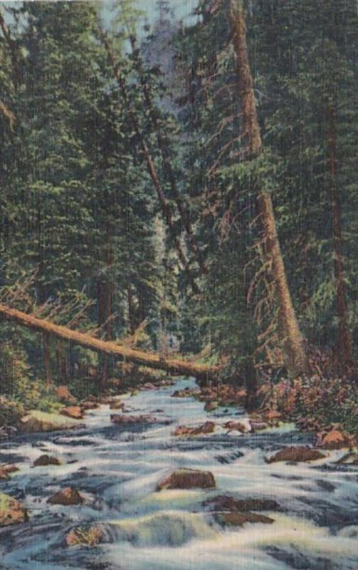 A Mountain Stream In The Southwest Curteich
