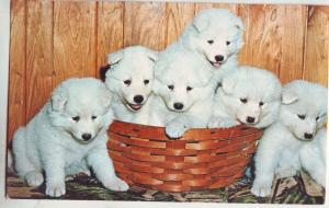 P736 vintage 6 samoyed puppies dogs in a basket