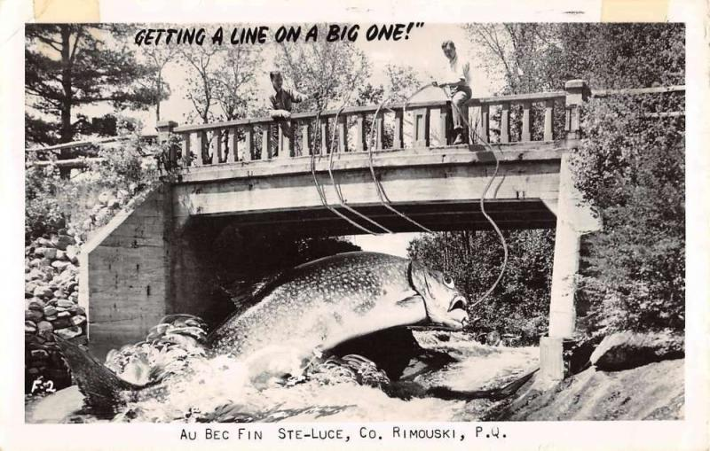 Rimouski Quebec Giant Fish Catch Real Photo Antique Postcard K62976