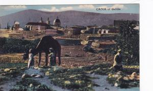General View, Cana of Galilee, Town Mentioned in New Testament, 00-10s, Camel