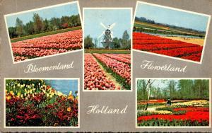 Netherlands Tulip Fields Multi View
