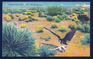 Buzzard Scavenger in Southwest USA used c1942