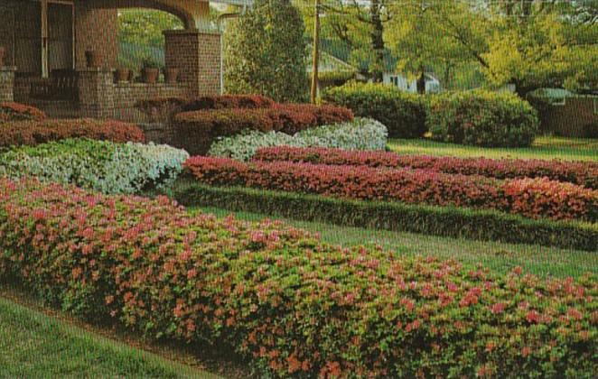 Mississippi MccOmb Beautiful Azaleas