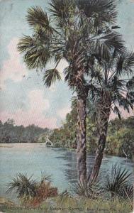 Florida Tampa Hillsboro River From Sulphur Spring 1918