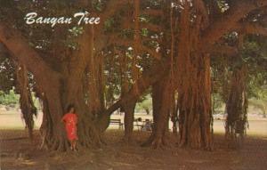 Hawaii Maui Lahaina Hawaii's Largest Banyan Tree