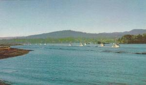 Fishing Fleet, Sooke Harbour, Vancouver Island, British Columbia, Canada, 194...
