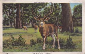 YOSEMITE, California, 30-40s ; Deer says I'm Wild about Yosemite