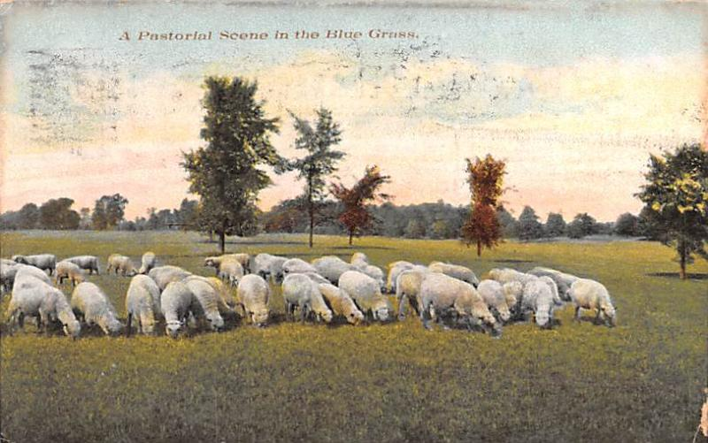 Post Card Old Vintage Antique, Sheep, eyy000013