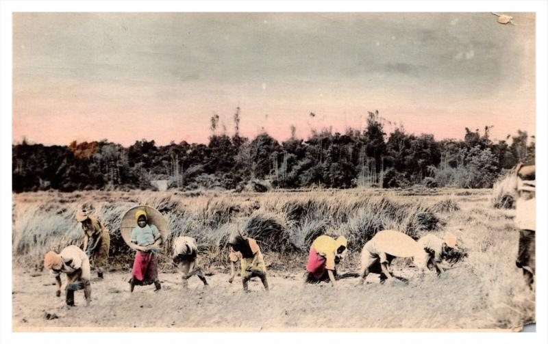 6550   Phillipines,  Planting Rice,   hand colored RPC