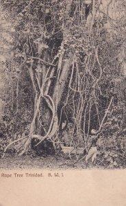 TRINIDAD, B.W.I., 1900-1910's; Rope Tree Trinidad