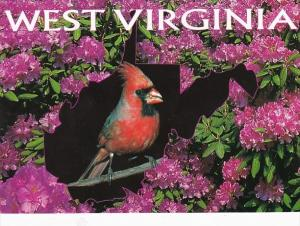 West Virginia State Bird & Flower The Cardinal and Rhododendron