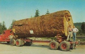Giant Fir Log on truck , 50-60s