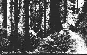 California Mount Hermon Deep In The Giant Redwoods