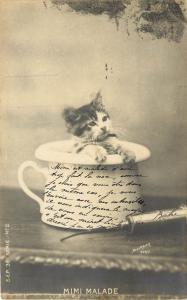 Postcard Tiny Kitten Sits in a Teacup next to A Curved Syringe Mimi Malade