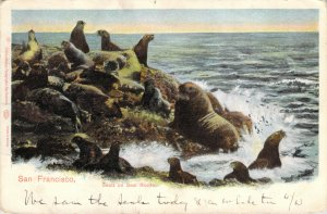 San Francisco Seals on Seal Rocks Charles Weidner Auto Chrom Unposted Postcard