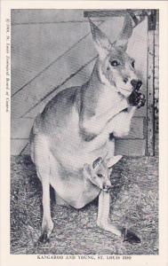 Kangarroo And Young Saint Louis Zoo Saint Louis Missouri