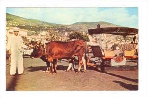 Funchal , Madeira, Bullock Car, 1970