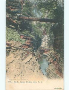 Unused Pre-1907 HUGE TREE LYING ACROSS MYSTIC GORGE Watkins Glen NY Q1639