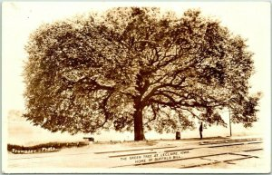 LeCLAIRE, Iowa RPPC Postcard THE GREEN TREE Home of Buffalo Bill /Fromader Photo