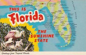 Florida Tropical Florida Greetings From Tropical Florida