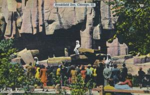 Brookfield Zoo Chicago Illinois IL Barless Zoo Unused Vintage Linen Postcard D25
