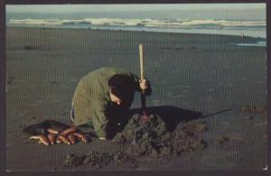Clam Digging,Pacific Coast Postcard