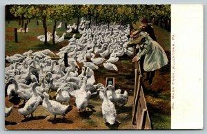 Allentown Pennsylvania~Little Girls Lean Over Fence at White Duck Farm~1905 IPCC