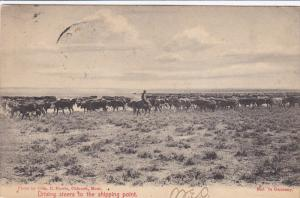 Driving steers to the shipping point, Horse back rider, PU-1907