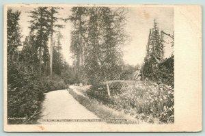 Tacoma Washington~Point Defiance Park~Path Among Trees~c1905 B&W Postcard