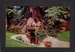 CA Eternal Tree Redwood Trees Forest Avenue Giants Redcrest California Postcard