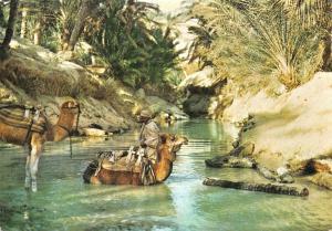 Tunisia Nefta Oasis Camels