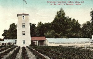 C.1910 Government Experiment Station, Chico, Cal. Hand Colored Postcard P125