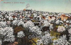 Baumbliite Gubens Bergen 1913