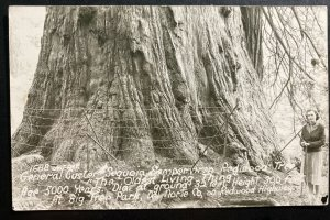 Mint USA Real Photo Postcard Cover Redwood Tree 5000 Years Old Big Tree Park