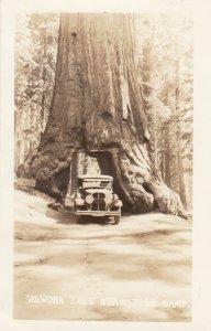 RP: FISH CAMP, California , 1920s-40s; Wawona Tree with vehicle driving through