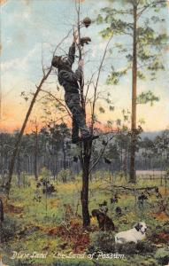 Dixie Land~The Land of Possum~Man Climbs Tree for Critters~Dog Below~1908 IPCC