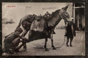 Mint India Real Picture Postcard  RPPC A Mule Bhisti