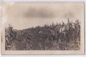 RPPC, Horse Drawn Corn Cutting