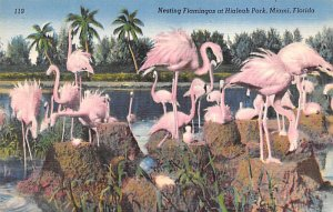 Nesting flamingos at Hialeah Park, Miami, Florida, USA Flamingos Unused