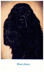Dogs . Black Cockeer