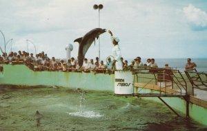MARINELAND, Florida, 1950-60s; Feeding Time at Marine Studios, Jumping Porpoises
