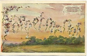 Forget Me Not Flowers Language of Flowers Antique Postcard 1909