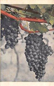 Fruit Assorted Grapes Unused
