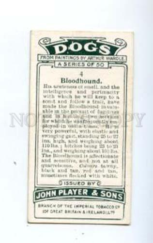 166923 BLOODHOUND by WARDLE Player CIGARETTE card ADVERTISING